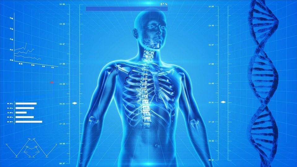 Covid-19 Anatomical Image